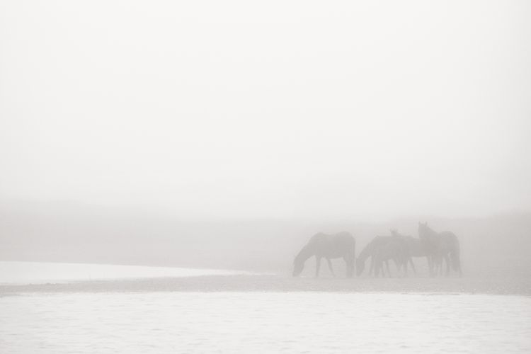 Sable-Island-Wild-Horses-Drew-Doggett-OE-038.jpg