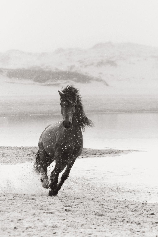 Sable-Island-Wild-Horses-Drew-Doggett-The-Chase.jpg