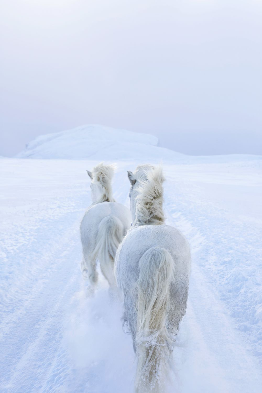 Drew-Doggett-In-the-Realm-of-Legends-Winters-Dream.jpg