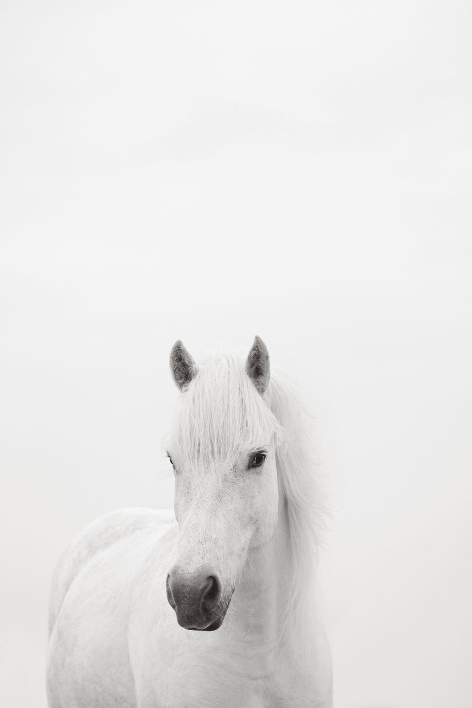 White-Horses-Camargue-Drew-Doggett-Belle.jpg