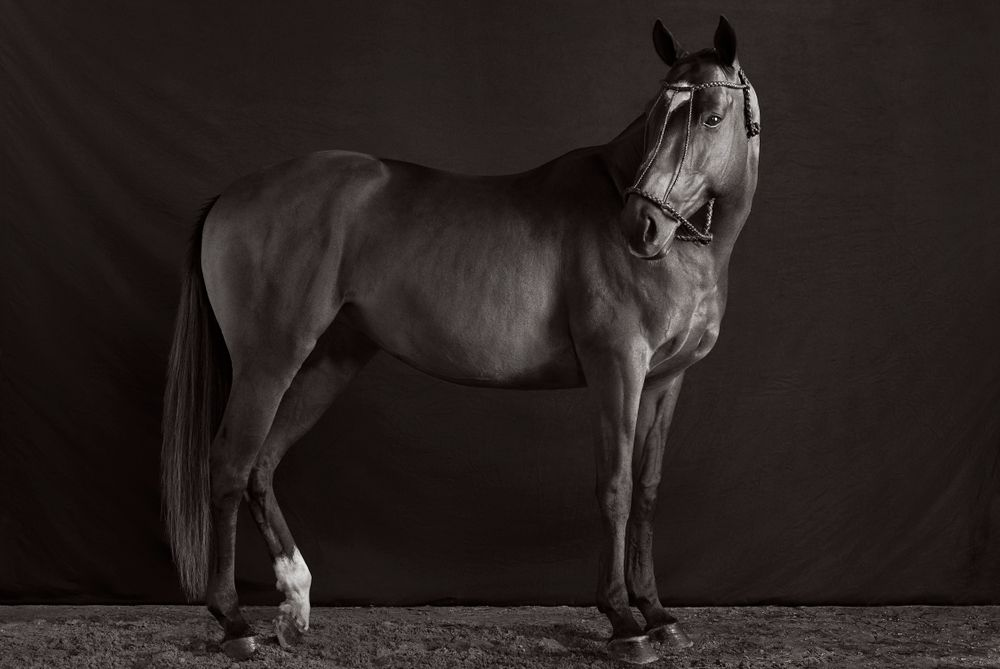 Equus-Light-and-Form-Drew-Doggett-Monarch-I-v2.jpg