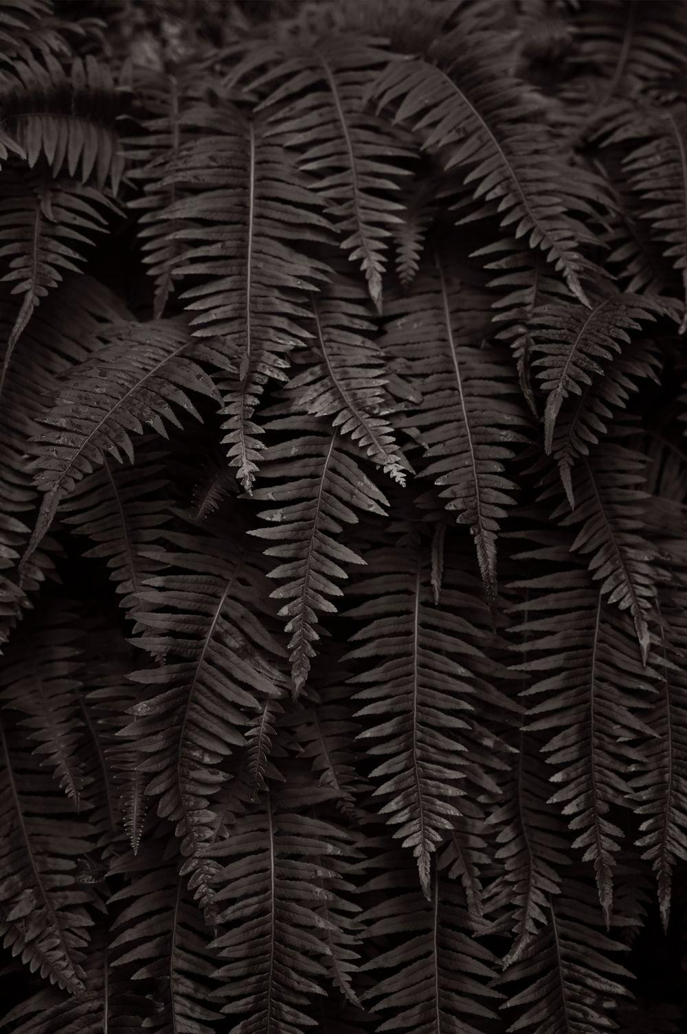 Americas-West-Drew-Doggett-Natures-Fabric.jpg