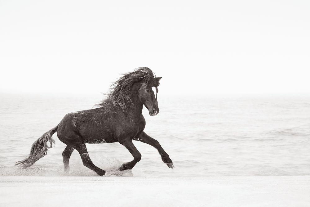 Sable-Island-Wild-Horses-Drew-Doggett-Wild-Heart.jpg