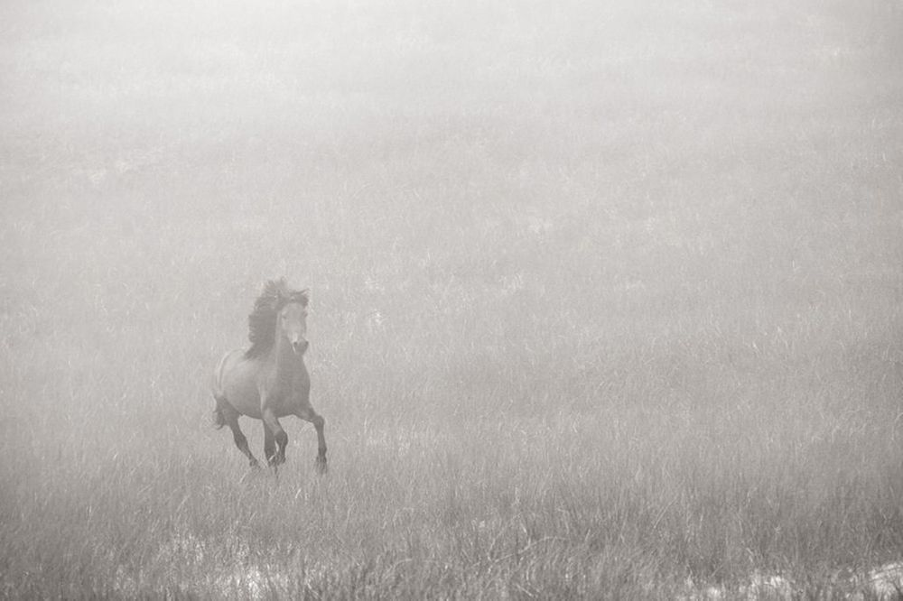 Sable-Island-Wild-Horses-Drew-Doggett-Wild-Heart-1024x682.jpg