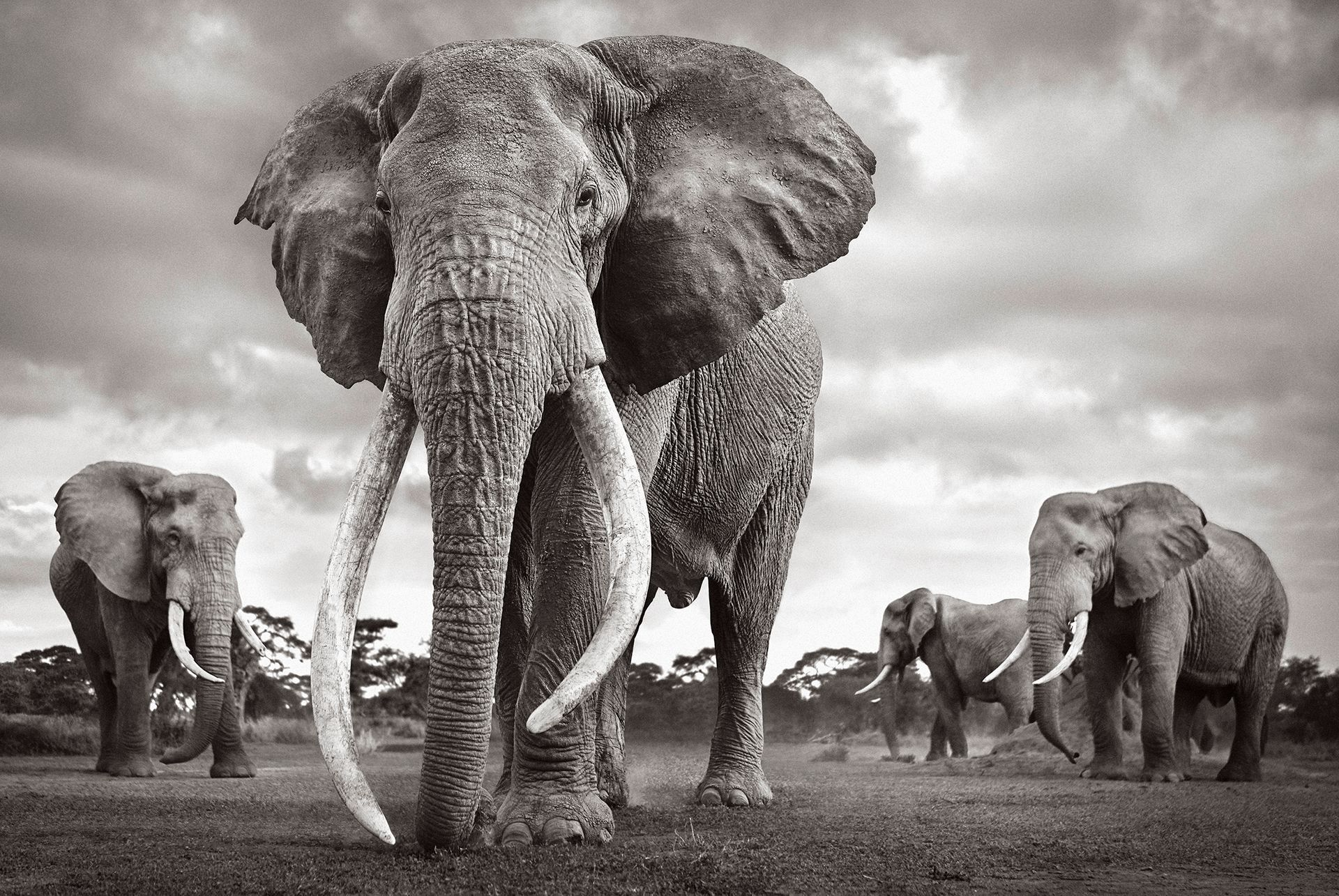 Colossal-Shadows-Super-Tuskers-of-East-Africa-Drew-Doggett-Land-of-Kings.jpg
