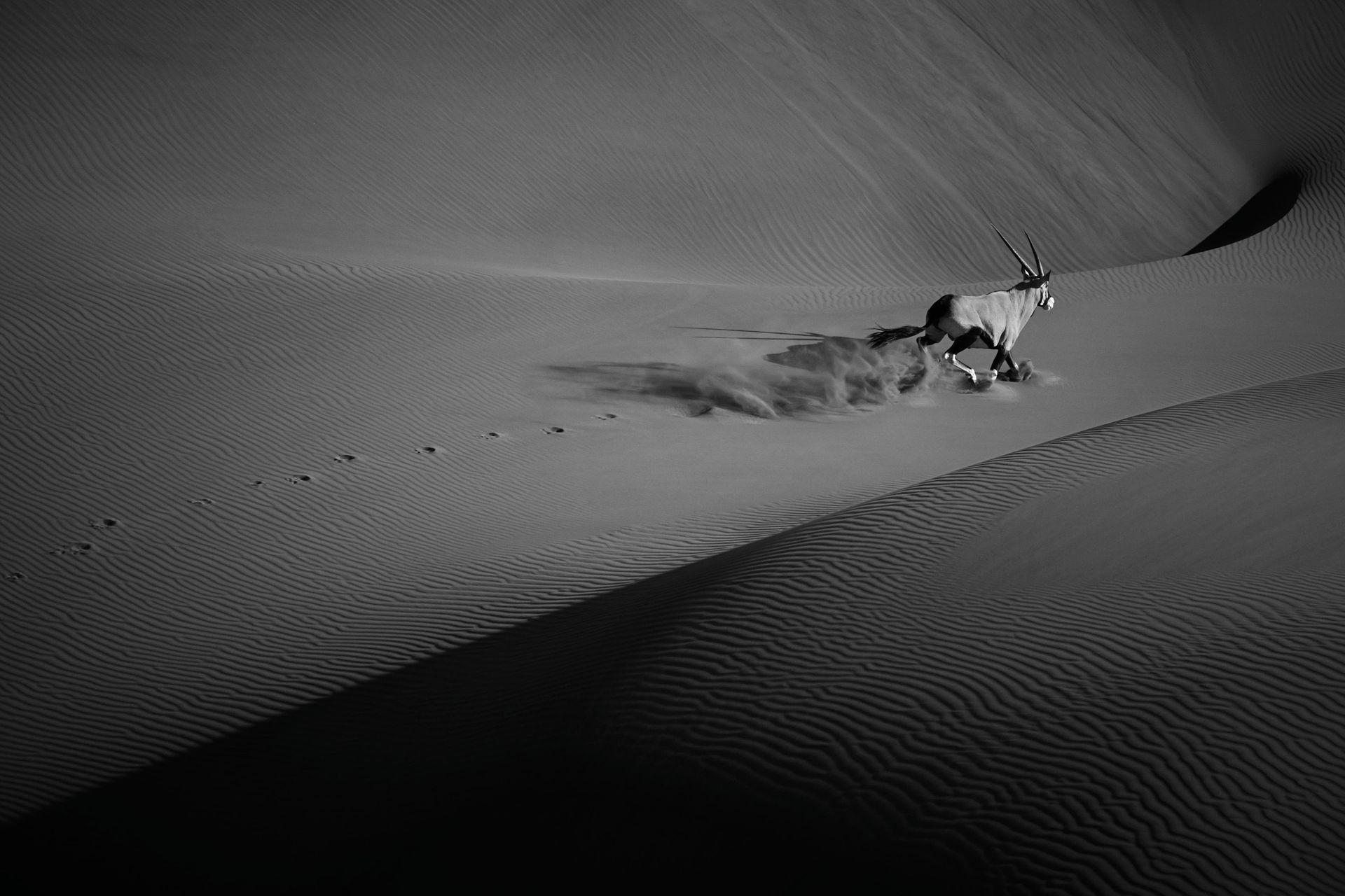 Dunes-Landscapes-Evolving-Drew-Doggett-Wild-Solitude.jpg