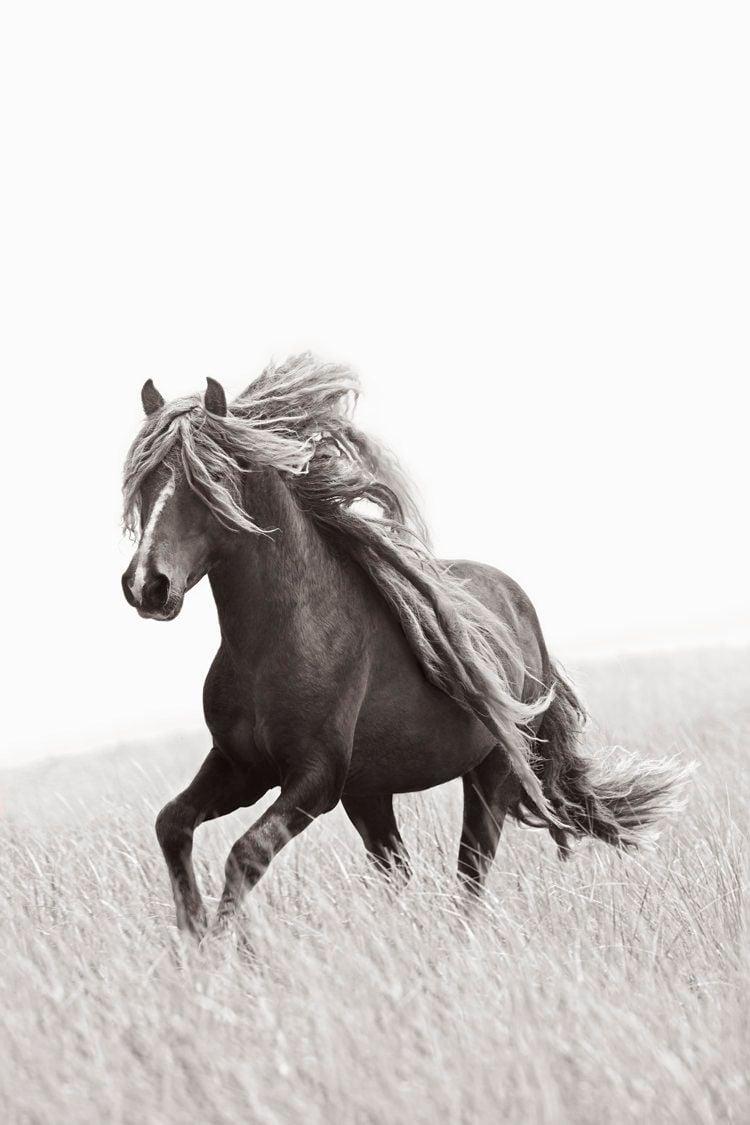 Sable-Island-Wild-Horses-Drew-Doggett-Legend.jpg