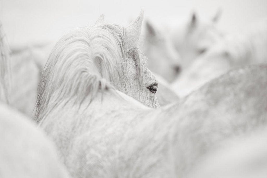 White-Horses-Camargue-Drew-Doggett-Together-1024x683.jpg