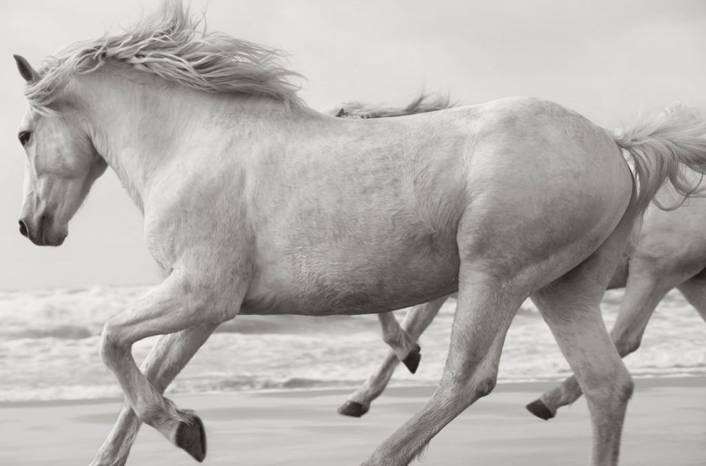White-Horses-Camargue-Drew-Doggett-La-Noblesse-1024x676.jpg