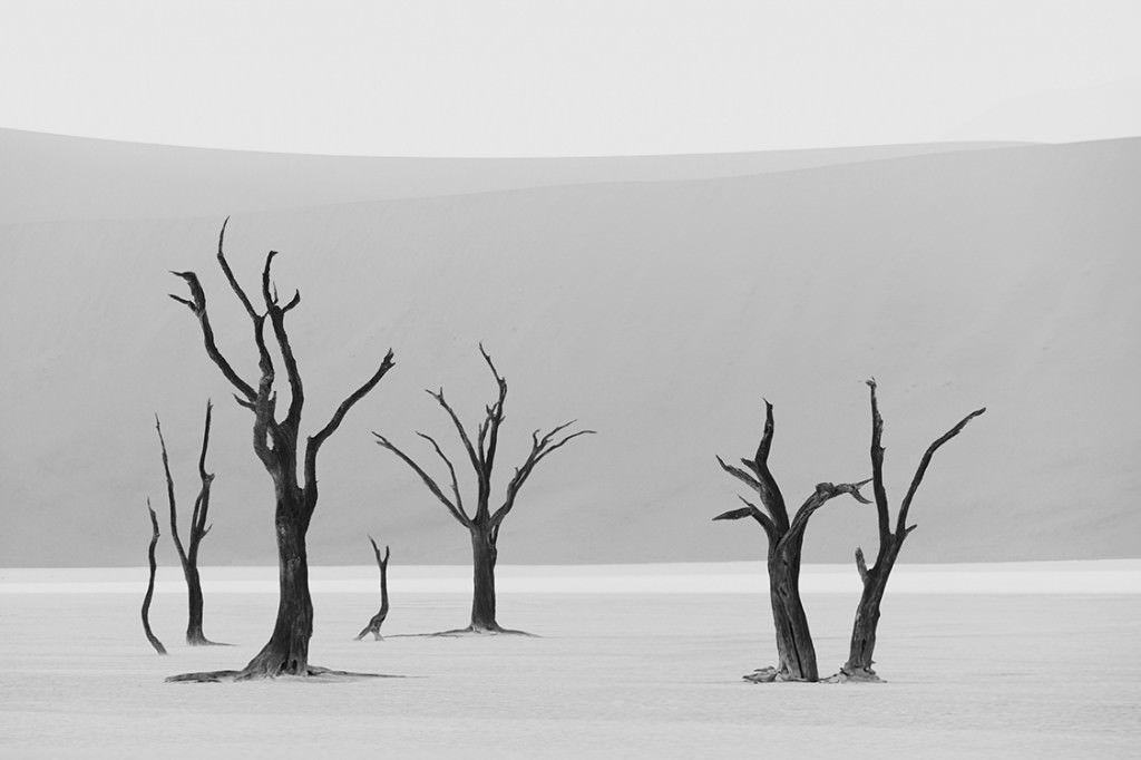 Dunes-Landscapes-Evolving-Drew-Doggett-Grove-1024x682.jpg