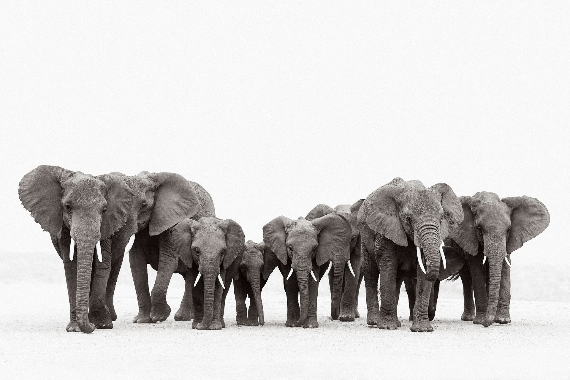 Colossal-Shadows-Super-Tuskers-of-East-Africa-Drew-Doggett-Wisdom's-Keepers.jpg
