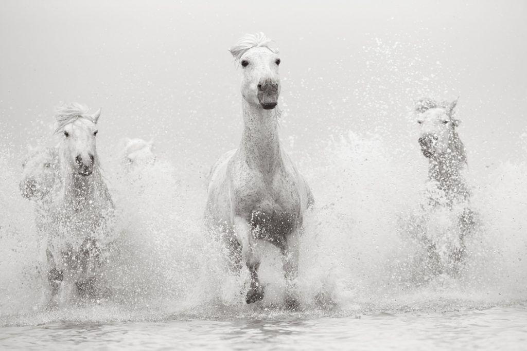 White-Horses-Camargue-Drew-Doggett-Luminary-1024x683.jpg