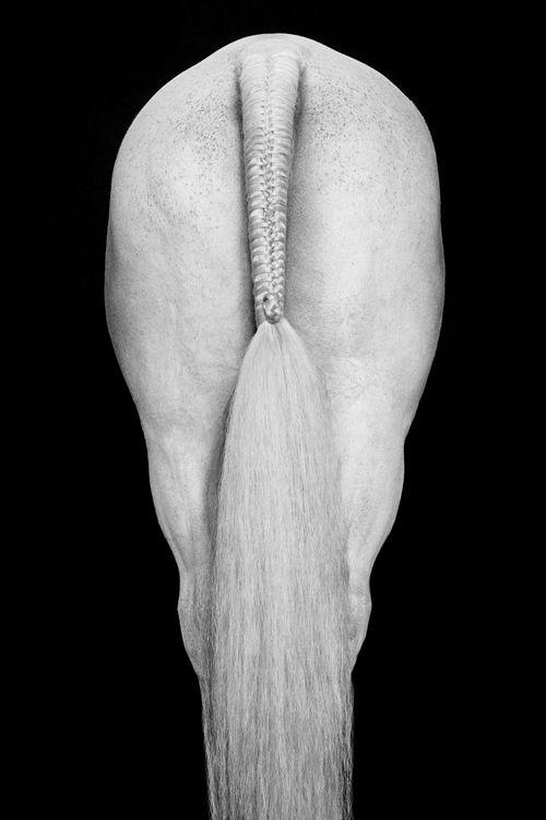 Equus-Light-and-Form-Drew-Doggett-Align-III.jpg