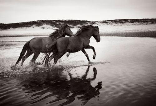 Sable-Island-Wild-Horses-Drew-Doggett-Soulmates.jpg