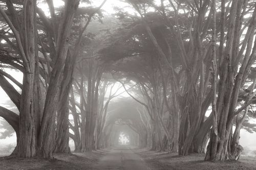 Americas-West-Drew-Doggett-Point Reyes.jpg