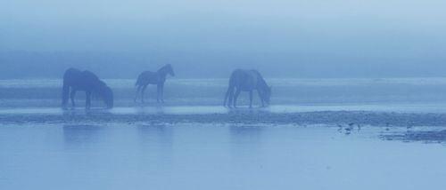 Horses and Nature V1.00_22_24_09.Still063.jpg