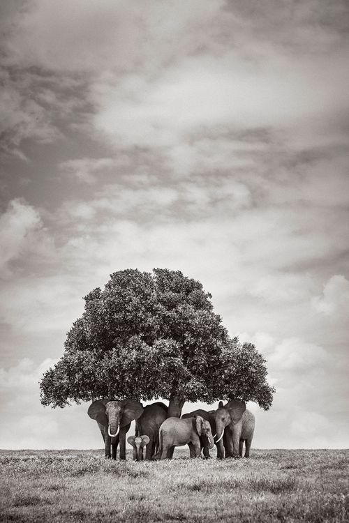 Colossal-Shadows-Super-Tuskers-of-East-Africa-Drew-Doggett-The-Gathering.jpg