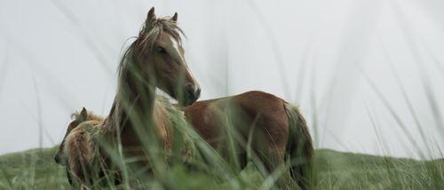 Horses and Nature V1.00_12_01_10.Still040.jpg