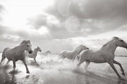 White-Horses-Camargue-Drew-Doggett-In-Stride-900x601.jpg