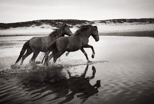 Sable-Island-Wild-Horses-Drew-Doggett-Soulmates-2-900x610.jpg