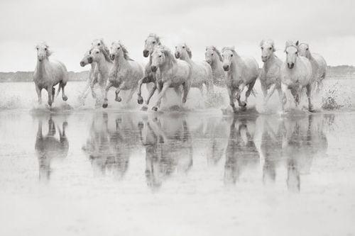 White-Horses-Camargue-Drew-Doggett-Spirit-of-the-Camargue-1024x683.jpg