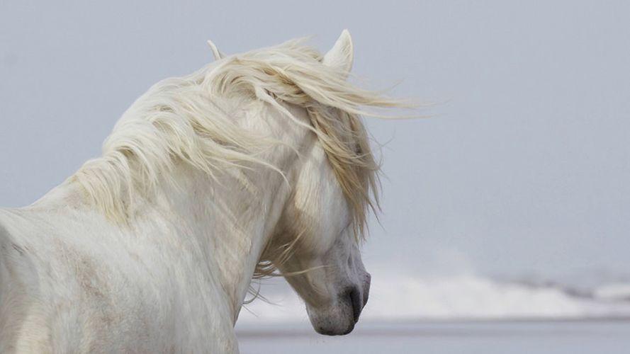 Drew-Doggett-White-Horses-Camargue-3.jpg