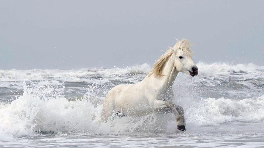 Drew-Doggett-White-Horses-Camargue-1.jpg