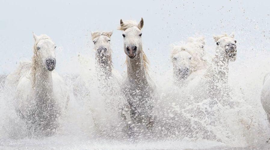 Drew-Doggett-White-Horses-Camargue-2.jpg
