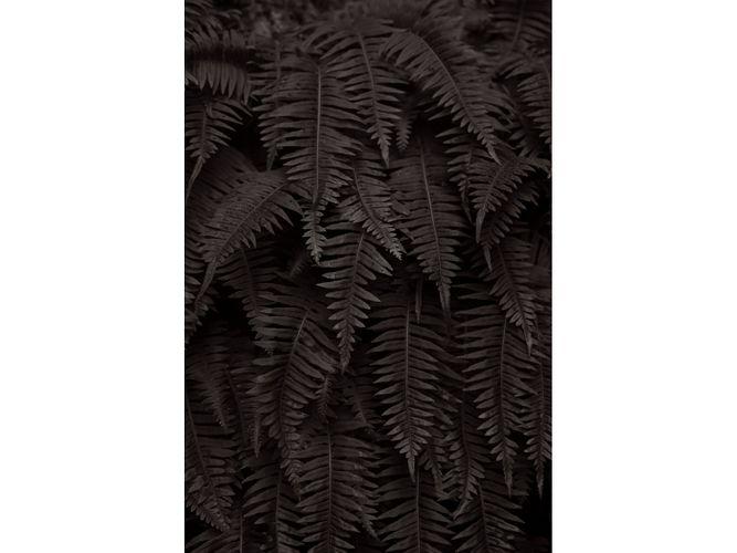 Natures-Fabric.jpg