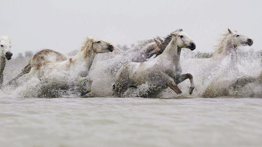 Drew-Doggett-White-Horses-Camargue-6.jpg