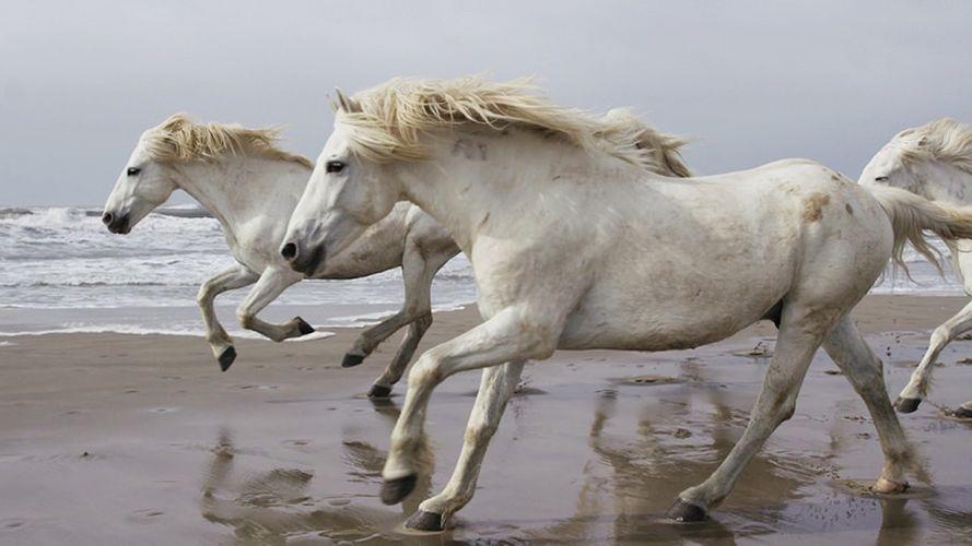 Drew-Doggett-White-Horses-Camargue-5.jpg